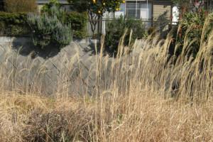 雑草だらけの空き地