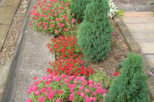 花壇のカリブラコア