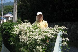 開花中のセンニンソウ
