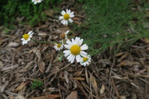 花のクローズアップ