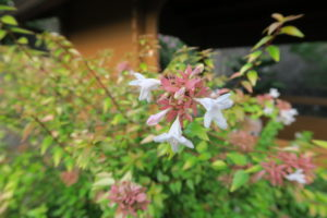 カレイドスコープの花