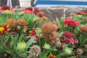 ガイラルディアの花がら