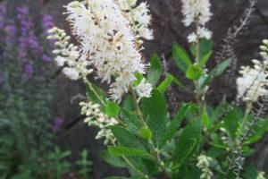 ハミングバードの花